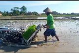 Petani Lampung percepatan tanam saat pandemi corona