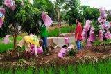 Petani Kulon Progo kembangkan klengkeng sistem surjan