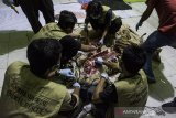 Sadis, harimau sumatera di Riau mati dijerat pemburu jelang Lebaran