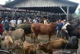 Pedagang dan Peternak melakukan traksaksi jual beli ternak sapi di pasar hewan, Desa Sibreh, Kecamatan Suka Makmur, Kabupaten Aceh Besar, Aceh, Kamis (20/5/2020). Traksaksi perdagangan ternak sapi di pasar tradisional itu berlangsung ramai pengunjung membeli sapi dengan harga penawaran Rp20 juta hingga Rp70 juta per ekor menurut besaran  sapinya. Antara Aceh/Ampelsa.