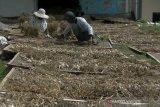Pembelian bawang putih oleh PNS Temanggung belum kurangi stok petani