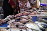 Harga ikan di TPI Paotere Makassar cenderung turun di tengah pandemi