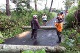 Sejumlah pohon di Magelang tumbang diterjang angin kencang