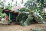 Sejumlah pohon tumbang di Padang Pariaman akibat cuaca ekstrem