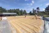 Bulog Sulawesi Tenggara target naikkan serapan beras petani 24 ribu ton