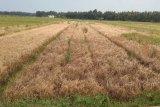 Sembilan Gapoktan di Kulon Progo dapat klaim AUTP Rp121,44 juta