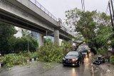 Pohon tumbang di Jalan Demang Lebar Daun Palembang sebabkan kemacetan