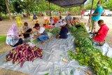 Distrik Yapsi  siapkan 230 hektar lahan pertanian ditengah pandemi COVID-19