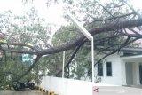 Kota Palembang dihantam angin kencang berkecepatan 72 kilometer per jam