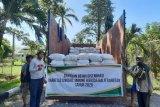 Balitbangtan bantu benih jagung toleran kekeringan ke NTT