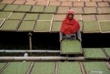 Organisasi buruh  harap pemerintah pertimbangkan kembali kenaikan cukai