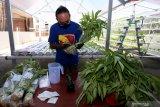 Warga mengemas hasil panen sayuran yang di tanam dengan sistem hydroponik di atas atap rumahnya di Blitar, Jawa Timur, Sabtu (23/5/2020). Warga tersebut merupakan pengusaha lokal yang beralih profesi dari pengusaha pakaian jadi, menjadi berkebun guna memanfaatkan masa pandemi ini agar tetap produktif. Antara Jatim/Irfan Anshori/zk