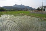 Petani harus terus diberi semangat agar produksi pangan saat pandemi