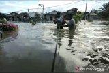 Banjir di Kota Samarinda meluas, sejumlah akses jalan lumpuh total