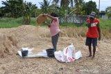 Bupati Kupang sebut keterersediaan pangan aman selama COVID-19