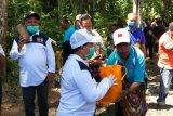 PKK Jayapura salurkan bantuan bibit sayuran dan buah