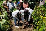 Bupati Jayapura: Berkebun hendaknya menjadi kebutuhan dasar warga kampung