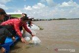 Jaga persediaan, Pemkab Seruyan kembali tebar benih ikan di sungai