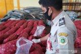 36 ton bawang merah impor ilegal asal Malaysia