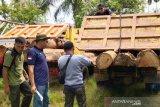 Tujuh orang pelaku ilegal pembalakan liar ditangkap polisi