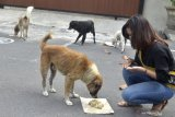Pemberian Makanan Anjing Liar