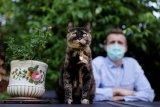 Seekor kucing berhasil sembuh dari virus corona