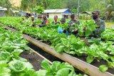 Kodim 1709/Yawa bersama kelompok tani Ketuapi panen perdana sayuran