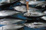 Ekspor tuna dan lobster asal Padang terhenti sejak pandemi COVID-19