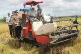 Forkopimda Merauke lakukan panen raya padi seluas 42 hektare