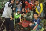 Pergi ke hutan, warga Agam temukan  Rafllesia Arnoldi  mekar sempurna (Video)
