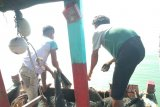 Pemkab Mukomuko imbau nelayan waspadai gelombang tinggi