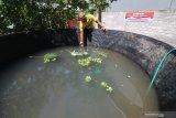 Warga melakukan perawatan budidaya ikan lele menggunakan sistem bioflok di Kampung Tanggung Desa Wonoasri, Kediri, Jawa Timur, Sabtu (30/5/2020). Desa percontohan tersebut menerapkan protokol kesehatan dan berinisiatif menyediakan lumbung pangan melalui pelatihan aquaponik, budidaya lele sistem bioflok dan menejemen penyaluran bantuan sosial guna membantu warga beradaptasi di era normal baru saat pandemi COVID-19. Antara Jatim/Prasetia Fauzani/zk.