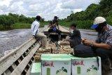 Kabupaten Mesuji distribusikan sebanyak 9.501 sembako gunakan perahu