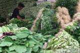 Mentan: Indonesia tidak batasi ekspor perkebunan dan hortikultura