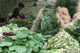 Pemuda Tani Sulut harap pemerintah bantu pemasaran hortikultura petani