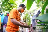 Pemprov Sulsel bantu bibit sayur untuk jaga ketahanan pangan keluarga
