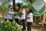 Relawan Hijau membentuk gotong royong ketahanan pangan warga Yogyakarta