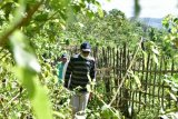 Gubernur siapkan Kebun Raya Pucak, destinasi wisata andalan Sulsel