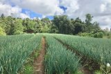 Kesejahteraan petani Sulut naik di saat pandemi Corona
