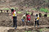 Polisi Tolikara Papua buka kebun membantu ketersediaan pangan lokal