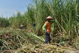 Petani berkomitmen tak jual gula di bawah harga Rp11.200/kg