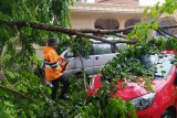 Hari naas bagi Sekjen IWO Medan, mobil tertimpa pohon tumbang