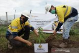 PT CPM tanam pohon di lokasi tambang di hari lingkungan hidup