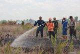 Walhi Sumsel minta perusahaan pemegang izin HGU cegah kebakaran hutan