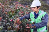 Spesies tumbuhan baru ditemukan di Mimika Papua, berada di area kerja Freeport