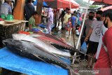 KKP sedang kaji budi daya ikan tuna di Teluk Tomini Sulteng