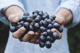 Hidup sehat makin diminati, sayur dan buah organik diburu konsumen