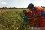 SMKN 1 Pundong berinovasi kembangkan alat perangkap hama wereng tanaman