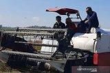 Menteri Pertanian mendorong gerakan percepatan tanam di semua daerah