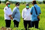 Menteri PUPR prioritaskan rehabilitasi jaringan irigasi pertanian di Pulang Pisau